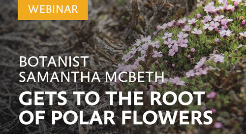Webinar: Botanist Samantha McBeth gets to the root of polar flowers