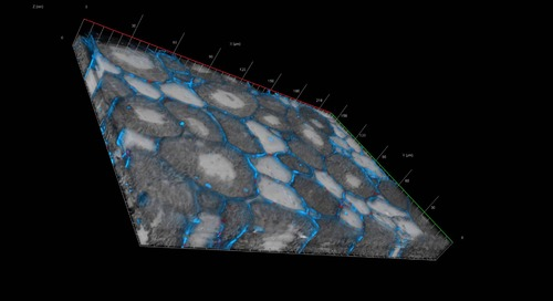 ZEN Module Correlative Array Tomography (CAT)