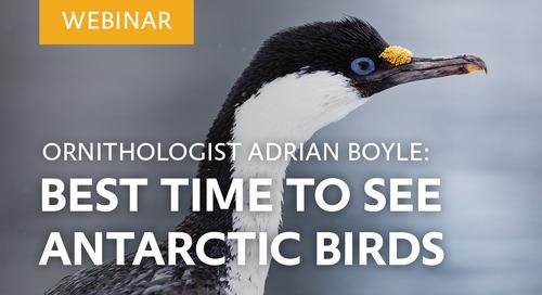 Webinar: Best Time to See Antarctic Birds