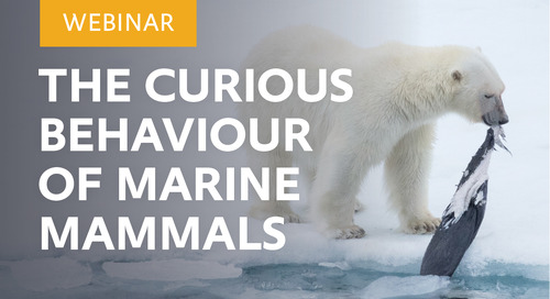 Webinar: The Curious Behavior of Marine Mammals