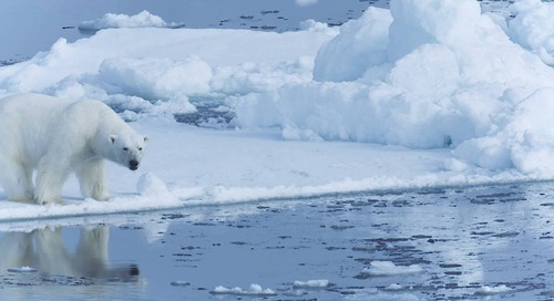 Bitten by the Polar Bug