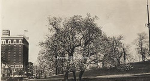 CPC 52 Japanese Magnolia