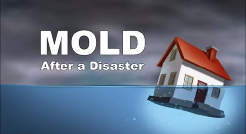 Mold After a Disaster