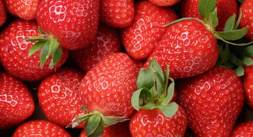 Huma Gro® Program Increases Strawberry Yields 14%, With an ROI > $2,500/acre
