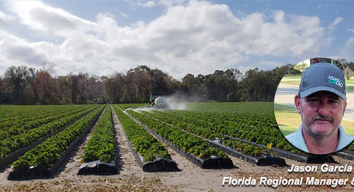 Are you Growing Brilliance Strawberries? Planting Requirements and Nutritional Needs for Florida Strawberries