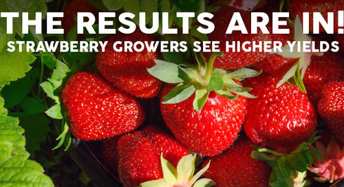 Huma Gro®: Practically Perfect in Every Way for Strawberries