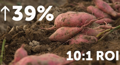 Huma Gro Program Increases Sweet Potato Yields 39% with a 10:1 ROI
