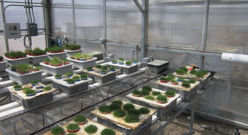 SUPER PHOS® Increases Bermuda Grass Shoot Biomass