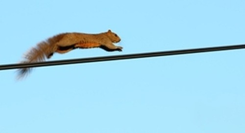 Embrace the Squirrel: How to Achieve Genuine Breakthroughs in Your Communications Effectiveness