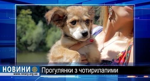 Ротарі дайджест: Допомога безпритульним тваринам