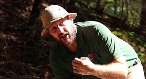 Steele Creek Explorer - Beavers