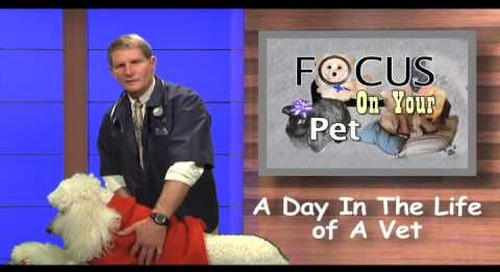A Day In The Life of A Vet Ep 011