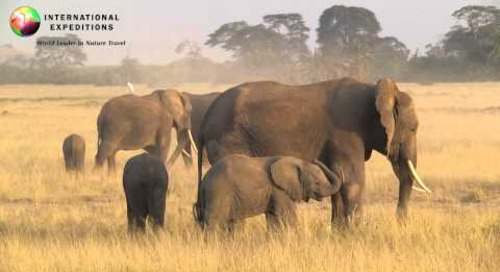 Africa Wildlife: Elephants