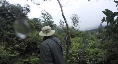 Rwanda - Gorilla Trek 360º - baby gorilla brushing past