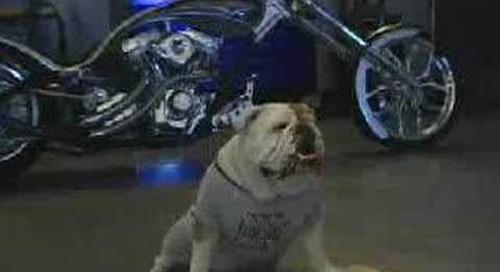 Mack Bulldog Reality TV