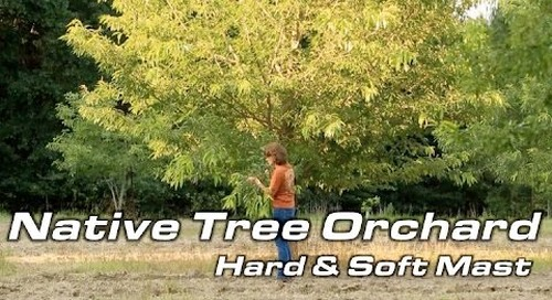Native Tree Orchard for Wildlife