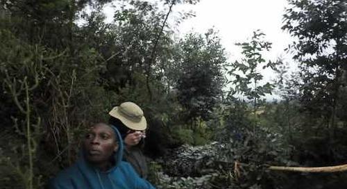 Rwanda - Gorilla Trek 360º - more from the  silverback
