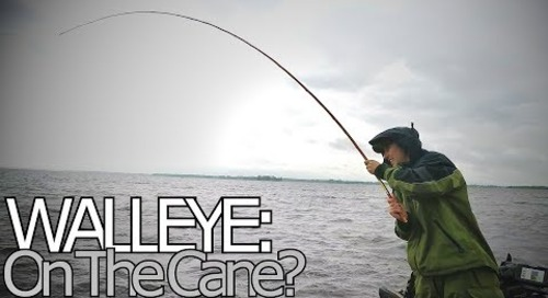 Big Walleye on a Cane Pole?!