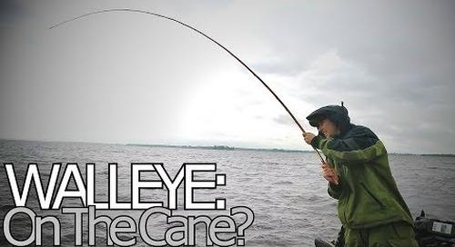 Big Walleye on a Cane Pole?!