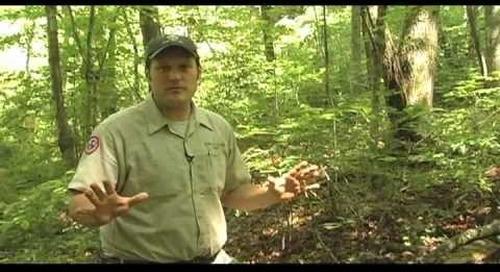 Steele Creek Explorer EP 4 - Turtles