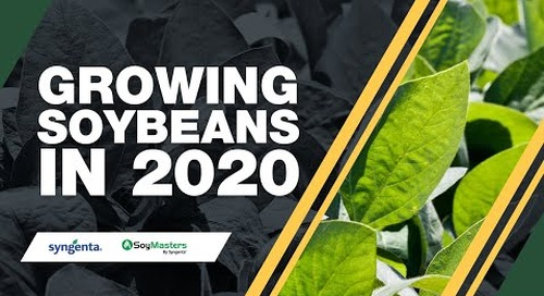 Growing Soybeans in 2020