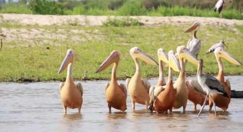 Selous Game Reserve, river paradise