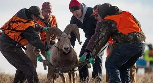Conserving Wild Nebraska