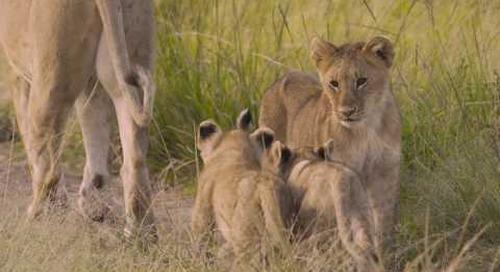 True Safaris