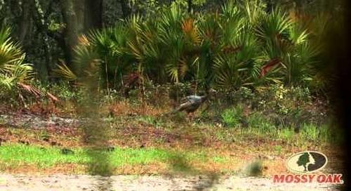 Wild Turkey Poults- Mossy Oak