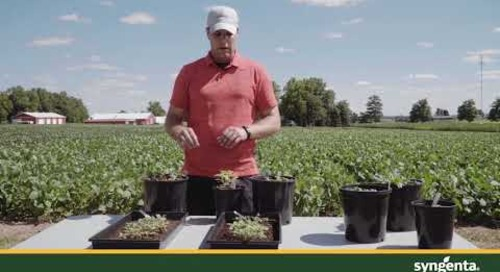 Managing Glyphosate Resistant Weeds
