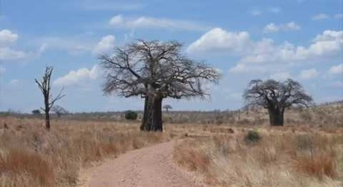 Ruaha National Park, off the beaten track