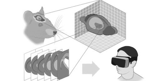 ZEISS Immersive VR Microscopy: Take a step into your 3D sample