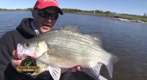 Huge White Bass Fishing in Manitoba - Manitoba Master Angler Minute