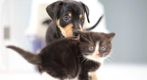 Kittens Meet Puppies For The First Time