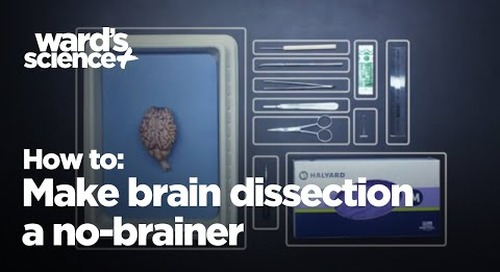 How to make brain dissection a no-brainer