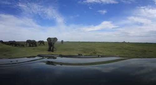 360 degree - Okavango Delta, elephant herd passing by