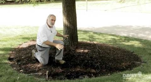 How to Prepare Your Trees for Summer Storms