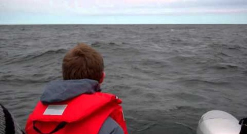 Beluga Viewing in Churchill, Manitoba