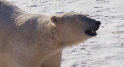 Polar Bears and more | Assiniboine Park