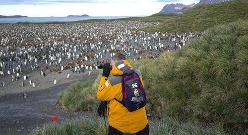 A Journey Beyond Description: South Georgia, Antarctica