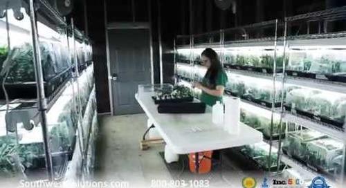 Vertical Growing Increases Efficiency at Colorado Cannabis Operation