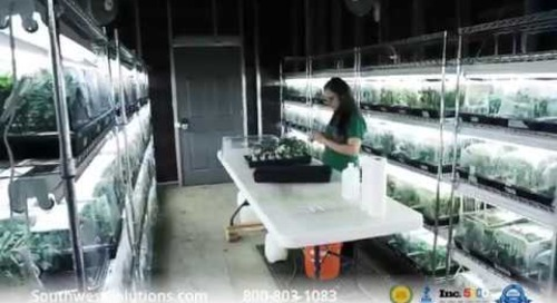 Vertical Growing Increases Efficiency at Colorado Cannabis Operation
