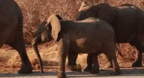 Specialist Safaris - Creative Adventures