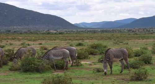 Samburu, a place like no other