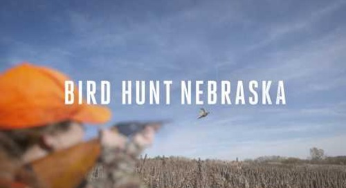 Bird Hunt Nebraska 2017