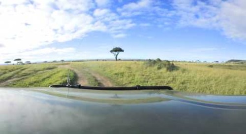 360 degree - On game drive in the Masai Mara ...  lion
