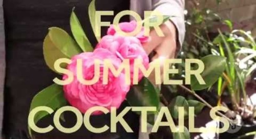 One Minute Tips: Edible Flower Ice Cubes (with Ben Gould)