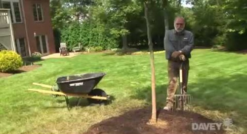 How to Plant a Tree: Part Three