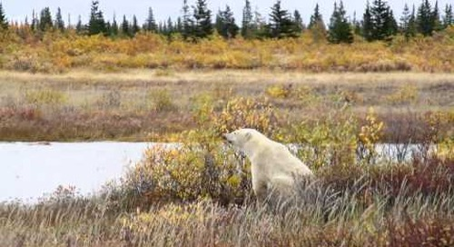 Summer in Churchill, Manitoba