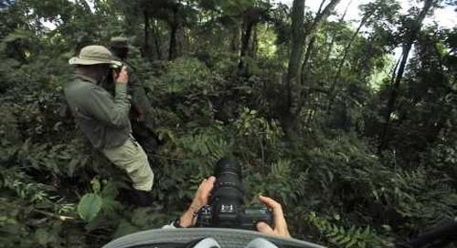 Uganda - Gorilla Trek 360º - see them?
